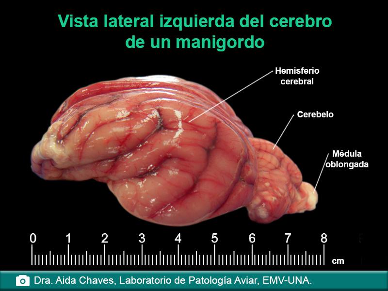 Anatomía de animales silvestres