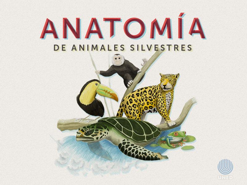 Detalle de Anatomía y Fisiología de especies silvestres